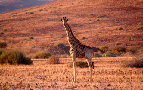 Teaser Namibia Treasure