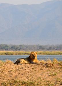 Rel TEaser Simbabwe