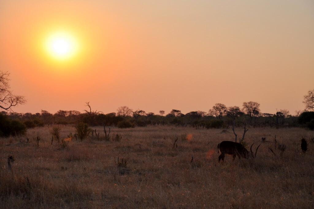 Simbabwe und Victoria Falls mit Wilderness Safaris sonne simbabwe safari land und leute afrika  tui berlin Hwange Nationalpark Sonnenuntergang