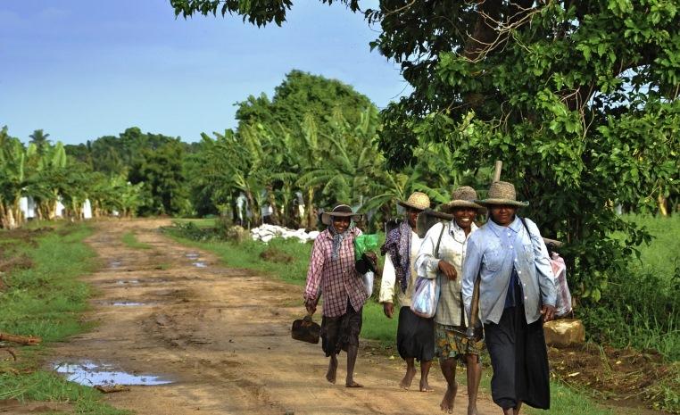 TUI Fernreisen   Trendreiseziel Sri Lanka tui hotels strand sonne land und leute indischer ozean orient expertentipps angesagte reiseziele angebote und specials  tui berlin sri lanka farmer