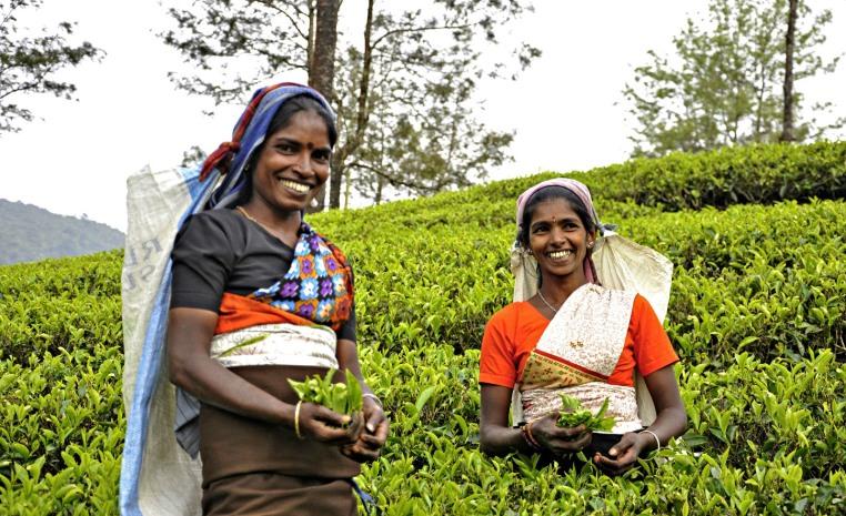 TUI Fernreisen   Trendreiseziel Sri Lanka tui hotels strand sonne land und leute indischer ozean orient expertentipps angesagte reiseziele angebote und specials  tui berlin sri lanka teeplueckerinnen