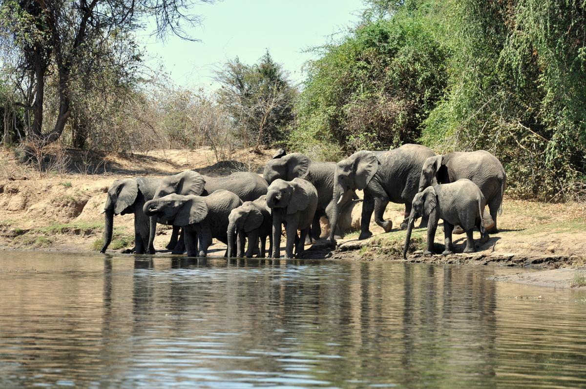 Zwischen Sambia und Simbabwe   mit dem Kanu unterwegs auf dem Sambesi sonne simbabwe safari reisebericht afrika  TUI Berlin Reisebüro Paddeltour Sambesi badende Elefanten