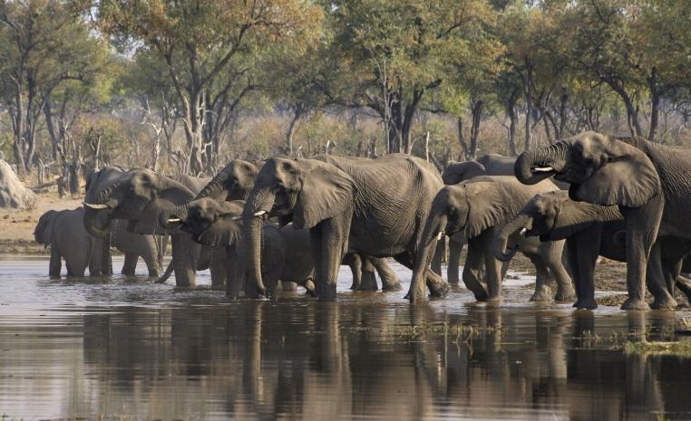 Was Sie noch nicht über Afrika wussten.... tui hotels tansania suedafrika strand simbabwe namibia kenia italien expertentipps botswana  tui berlin botswana aktiv erleben elefanten moremi reservat