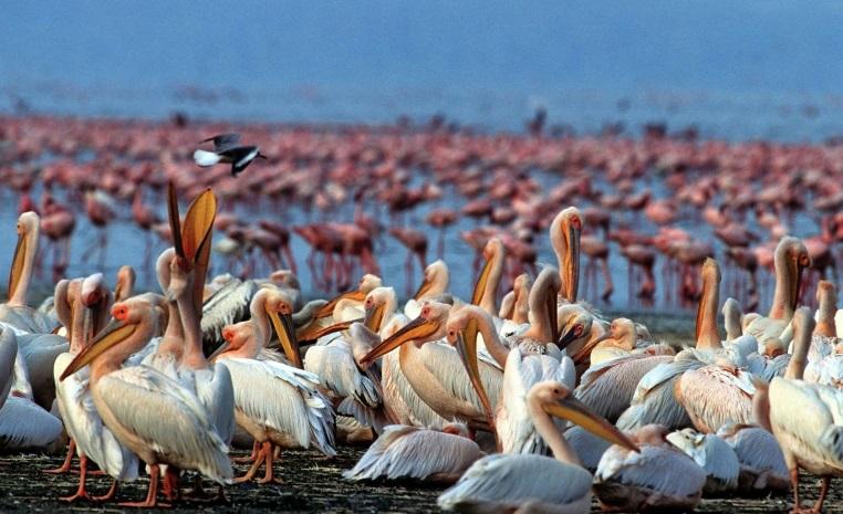 TUI, Reisebüro, World of TUI, Expertentipp, Natur, Afrika, Safari, Rundreise, Kapstadt, Sightseeing, Fotosafari, Kilimanjaro, Tiere, Wildlife, Reservate,