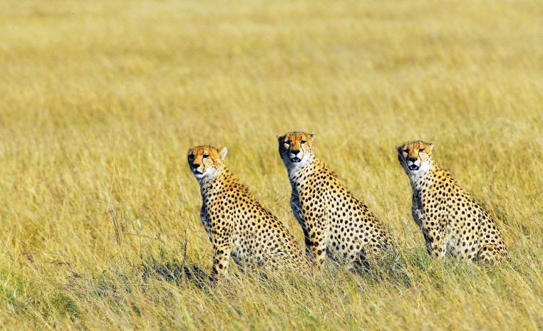 Was Sie noch nicht über Afrika wussten.... tui hotels tansania suedafrika strand simbabwe namibia kenia italien expertentipps botswana  tui berlin masai mara geparden