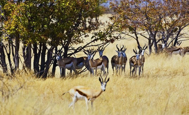 Was Sie noch nicht über Afrika wussten.... tui hotels tansania suedafrika strand simbabwe namibia kenia italien expertentipps botswana  tui berlin nachhaltiges namibia springbock