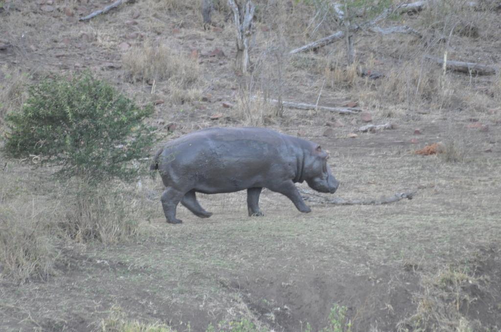 Traumlodge. Südafrika vom Krüger Park nach Kapstadt. suedafrika sonne safari afrika  DSC 0531