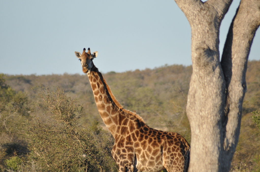 Traumlodge. Südafrika vom Krüger Park nach Kapstadt. suedafrika sonne safari afrika  DSC 0534