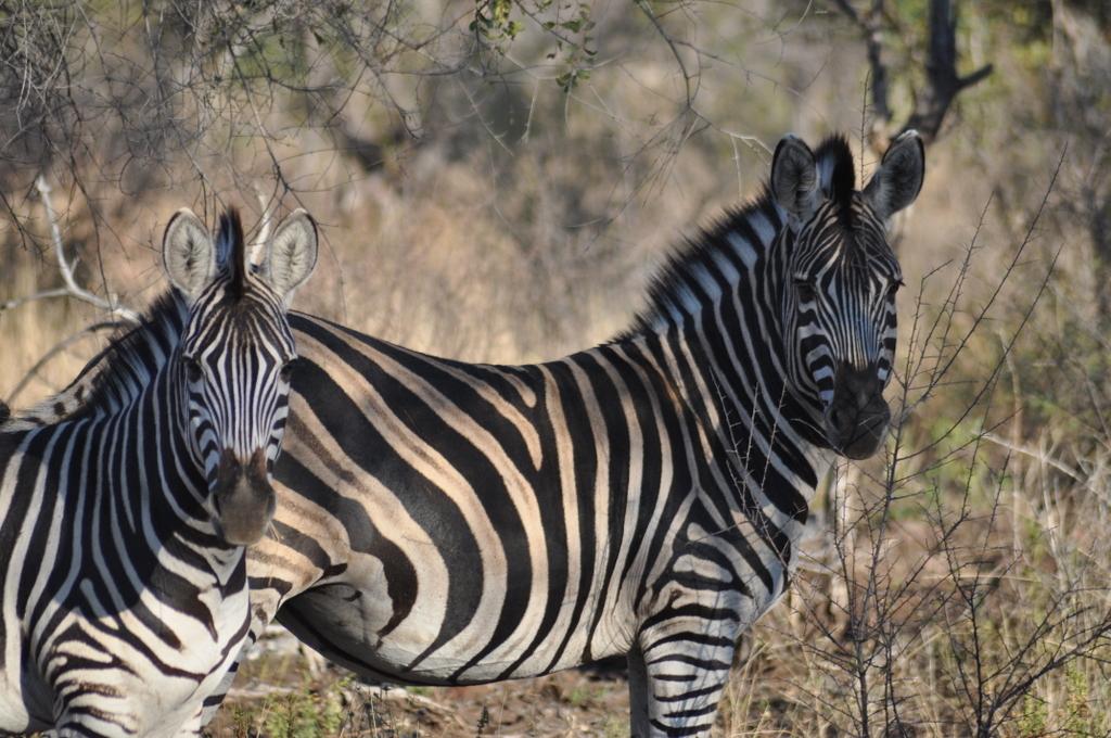 Traumlodge. Südafrika vom Krüger Park nach Kapstadt. suedafrika sonne safari afrika  DSC 0558