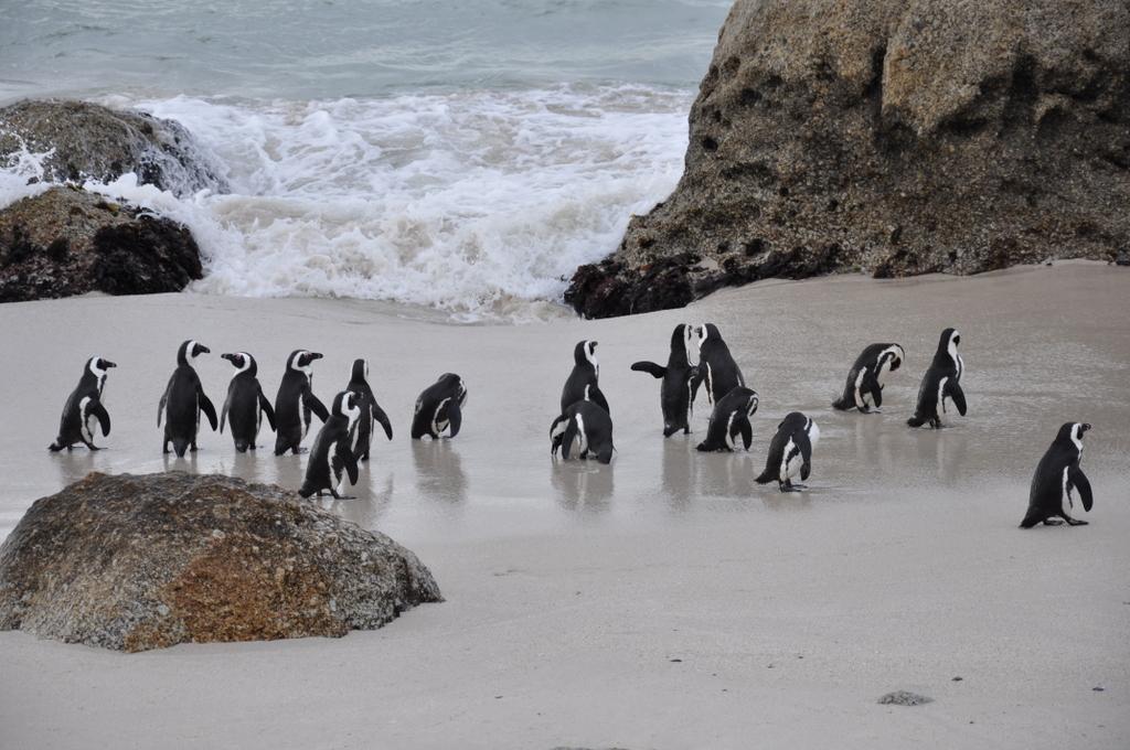 Traumlodge. Südafrika vom Krüger Park nach Kapstadt. suedafrika sonne safari afrika  DSC 0716