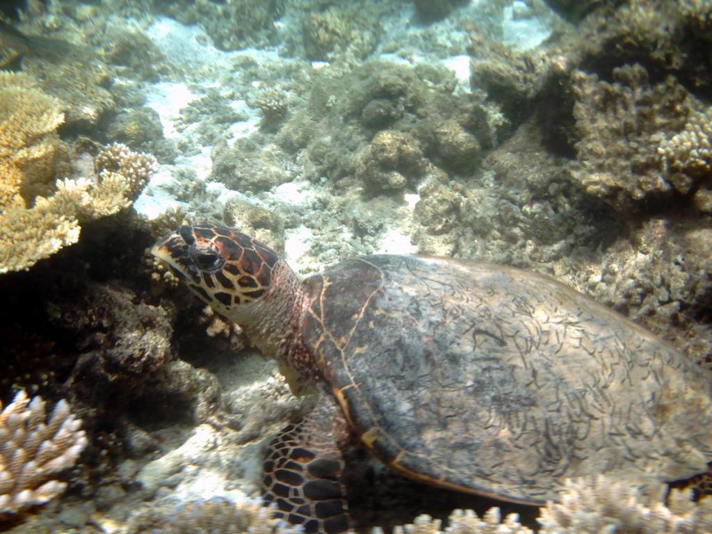 """Hochzeitsreise Malediven """"Lily Beach Resort & Spa"""" strand sonne malediven indischer ozean orient honeymoon 2  Bild 10"""