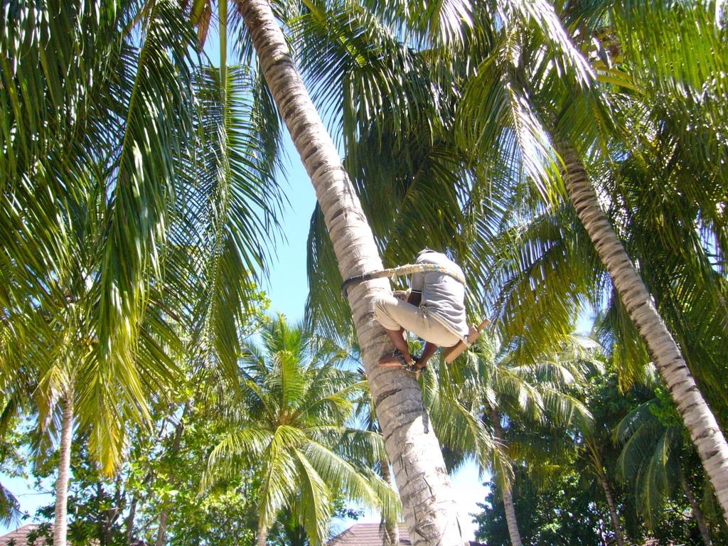 """Hochzeitsreise Malediven """"Lily Beach Resort & Spa"""" strand sonne malediven indischer ozean orient honeymoon 2  Bild 11"""