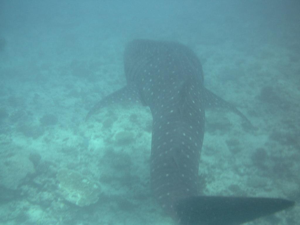 """Hochzeitsreise Malediven """"Lily Beach Resort & Spa"""" strand sonne malediven indischer ozean orient honeymoon 2  Bild 12"""