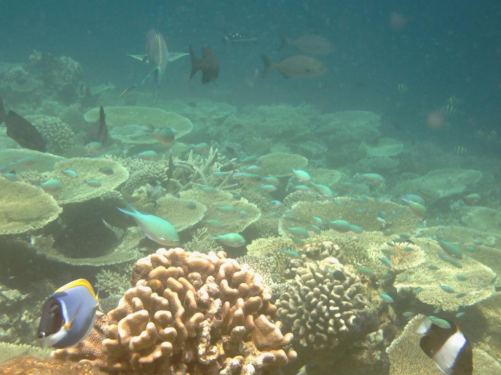 """Hochzeitsreise Malediven """"Lily Beach Resort & Spa"""" strand sonne malediven indischer ozean orient honeymoon 2  Bild 9"""