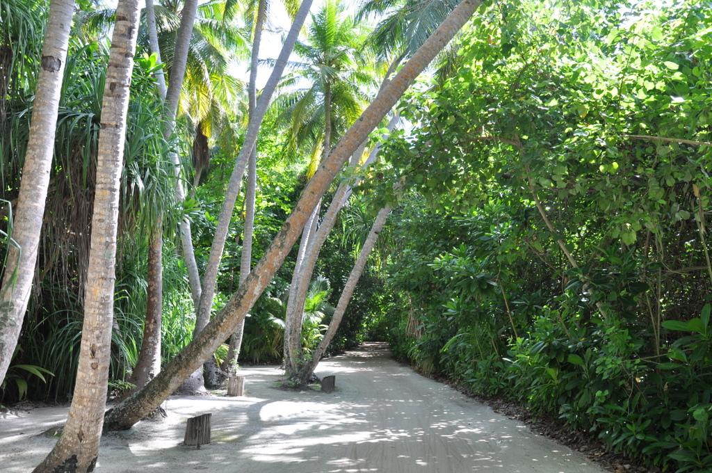 Six Senses Island Hopping auf den Malediven strand sonne malediven indischer ozean orient  DSC 7450