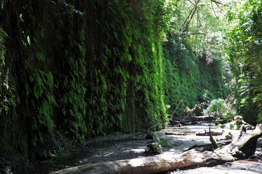 California Road Trip II. Von San Francisco nach Seattle. usa staedtereisen land und leute karibik mittelamerika  tui berlin amerika roadtrip redwood nationalpark farne