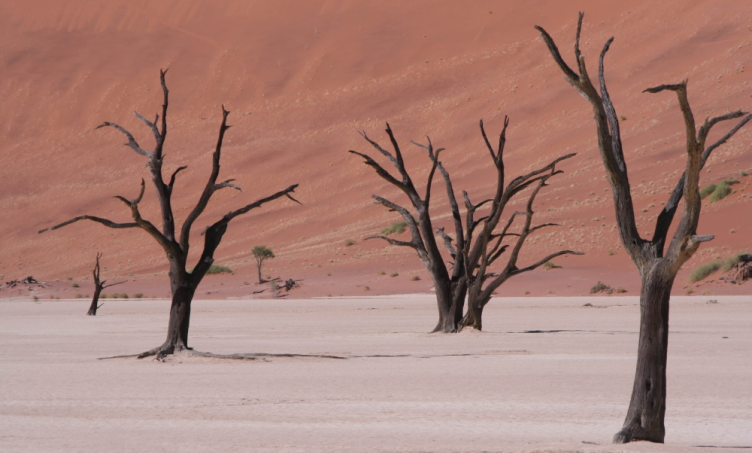 Header Namibia Treasure