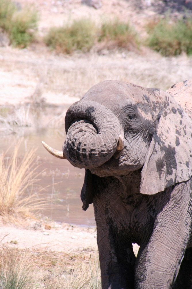 Namibia Treasures. sonne safari namibia afrika  tui berlin namibia damaraland camp elefant
