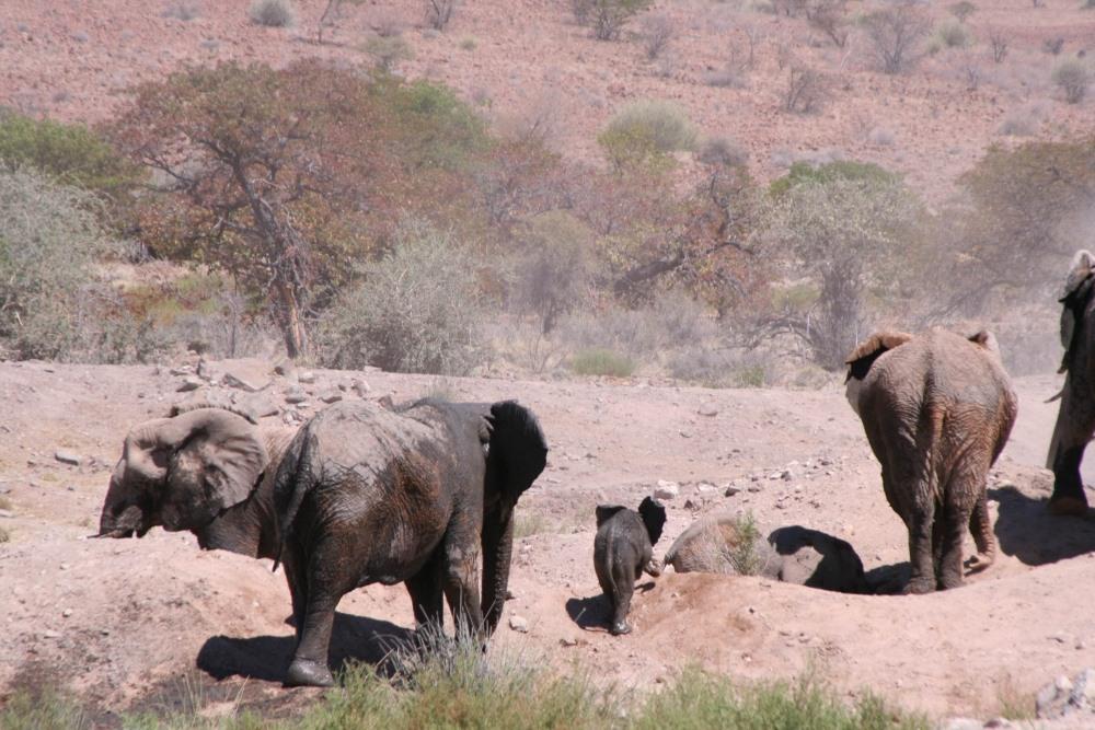Namibia Treasures. sonne safari namibia afrika  tui berlin namibia damaraland camp elefanten