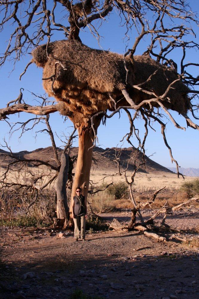 Namibia Treasures. sonne safari namibia afrika  tui berlin namibia vegetation saskia sanchez