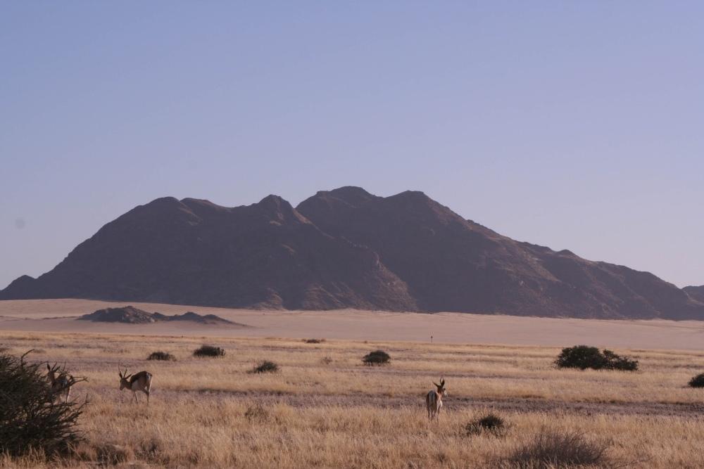 Namibia Treasures. sonne safari namibia afrika  tui berlin sossusvlei safari antilopen