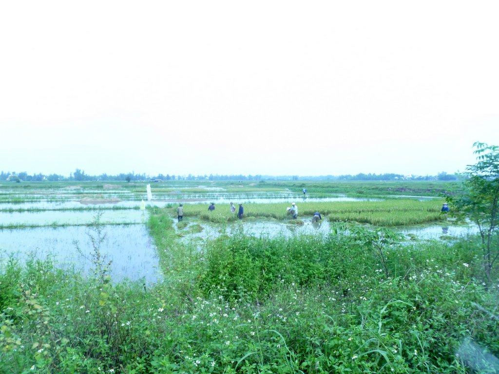 Hoi An. Freiluftmuseum in Zentralvietnam. vietnam strand staedtereisen sonne land und leute asien  tui berlin vietnam hoi an reisfelder