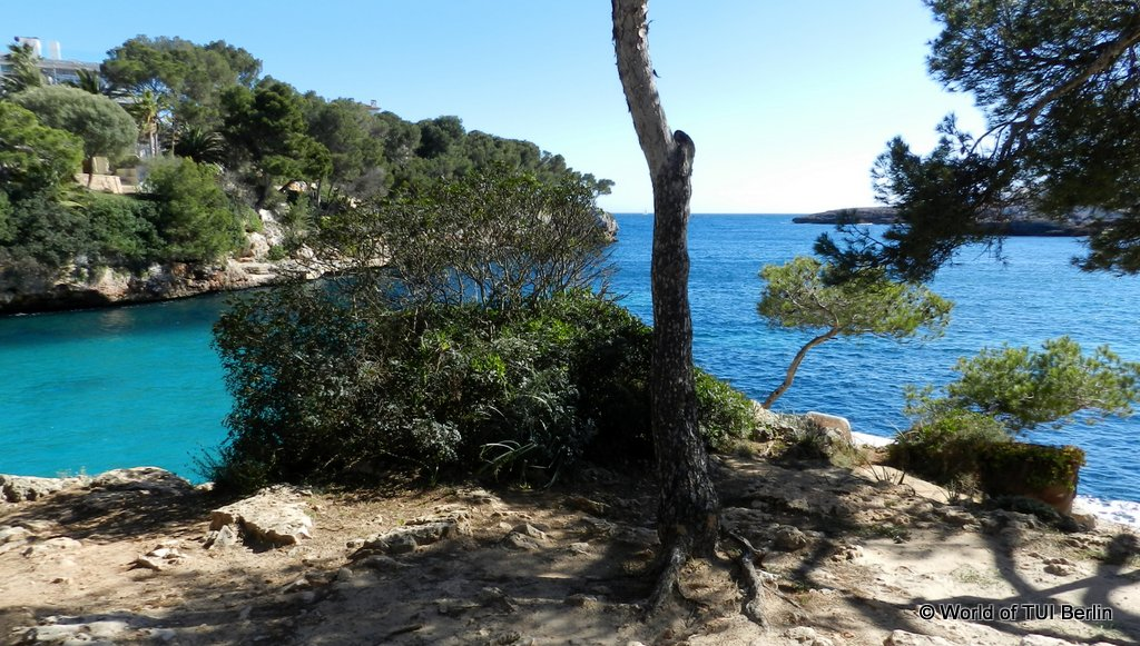 Traumbuchten und angesagte Beachclubs auf Mallorca strand staedtereisen sonne mallorca familie europa cluburlaub  mallorca3