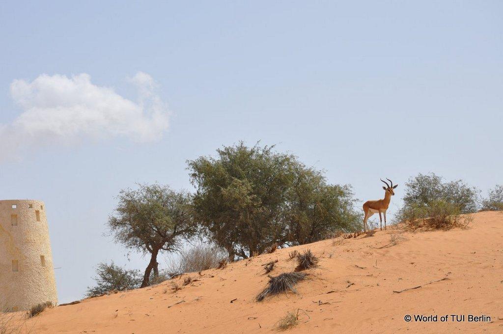 Sandboarding in Ras Al Khaimah. Eine Auszeit im Banyan Tree Al Wadi. staedtereisen sonne orient dubai  tui berlin ras al khaimah banyan tree al wadi vegetation