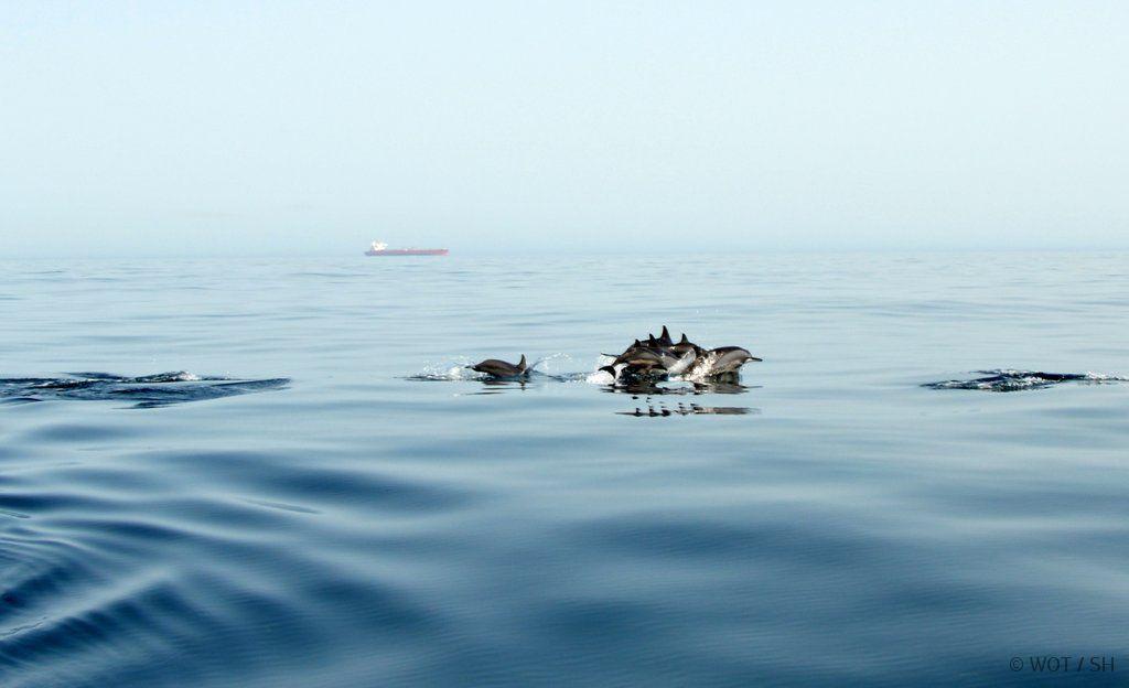 Zwischen Tradition und Moderne. Oman und Abu Dhabi strand staedtereisen sonne land und leute orient oman abu dhabi  096 DSC 01391