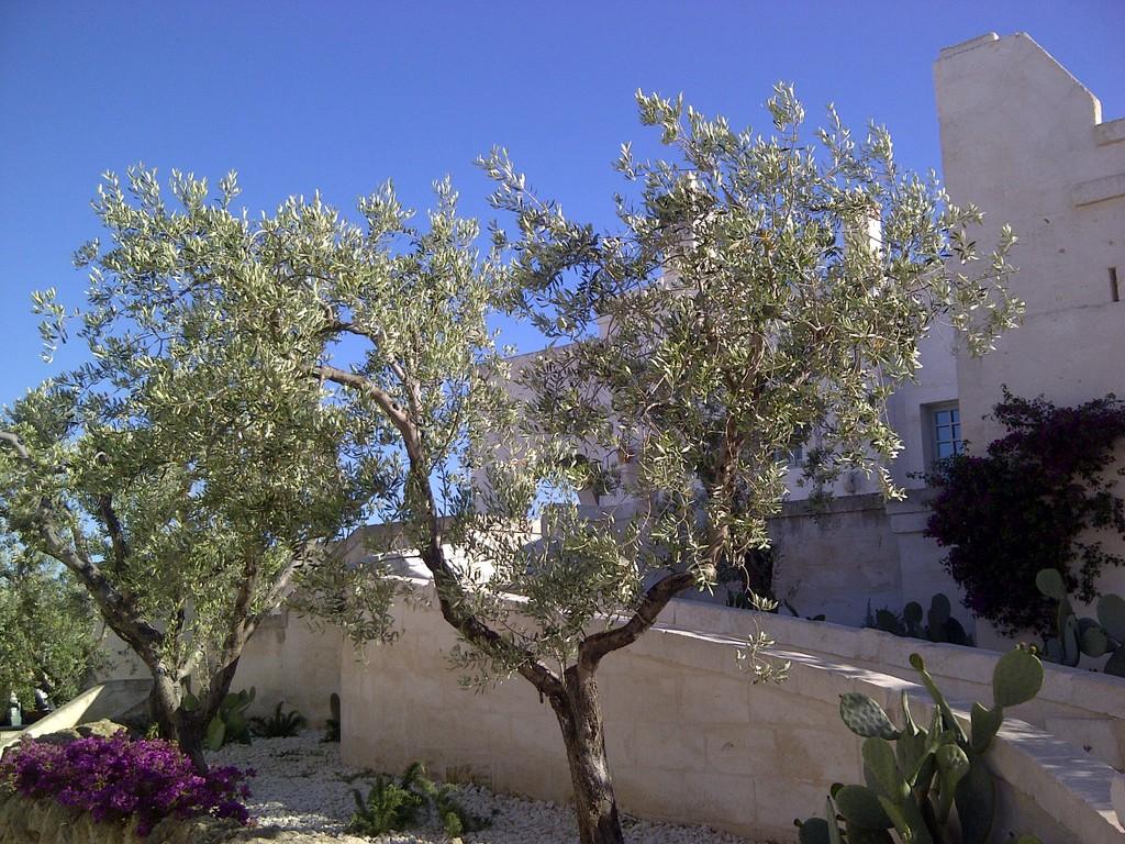 Durch Apulien und seine Kochtöpfe staedtereisen sonne land und leute italien europa  IMG 20130514 00339