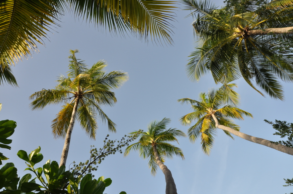 Malediven   wie finde ich meine Insel? Gefunden: Anantara Kihavah Maldives Villen strand sonne reisebericht malediven indischer ozean orient honeymoon 2  tui berlin Anantara Kihavah Palmwedel 1