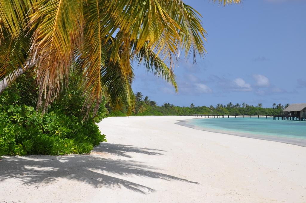 Shangri La Villingili   von Puderzuckerstrand und anderen Nebensächlichkeiten strand sonne malediven indischer ozean orient honeymoon 2  tui berlin Malediven Shangri La Villingili Palme Strand