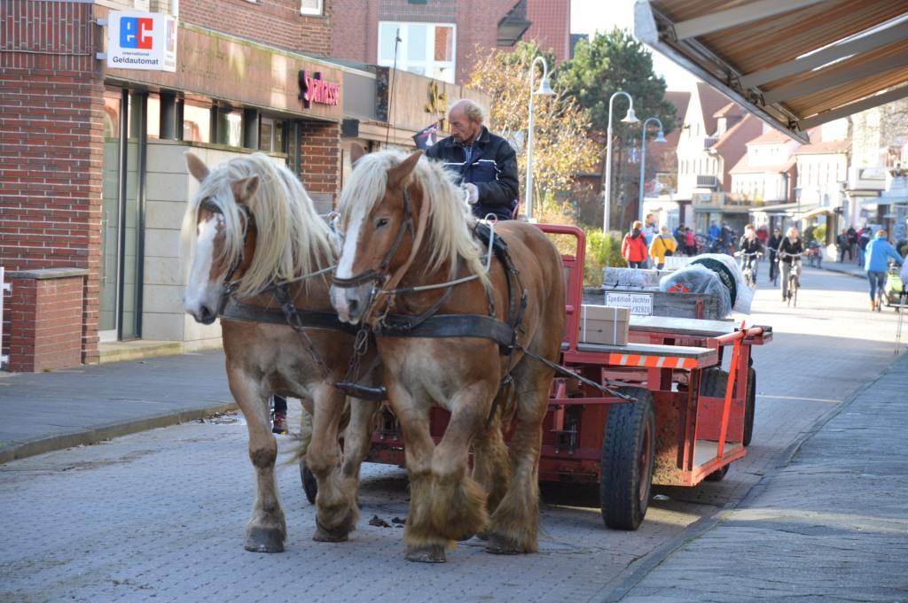 Von Watt, Wind und Wellen   Nordseeurlaub im Oktober land und leute europa deutschland  tui berlin juist nordsee pferde kutsche verkehr