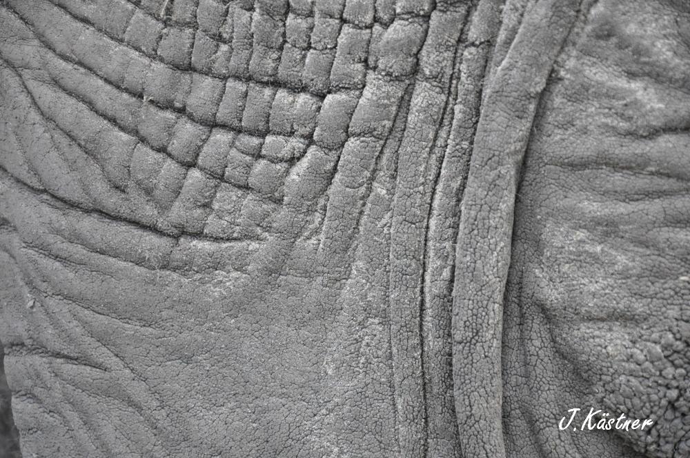 Botswana Treasures. sonne safari botswana afrika  tui berlin Botswana Abu Camp Elefantenhaut