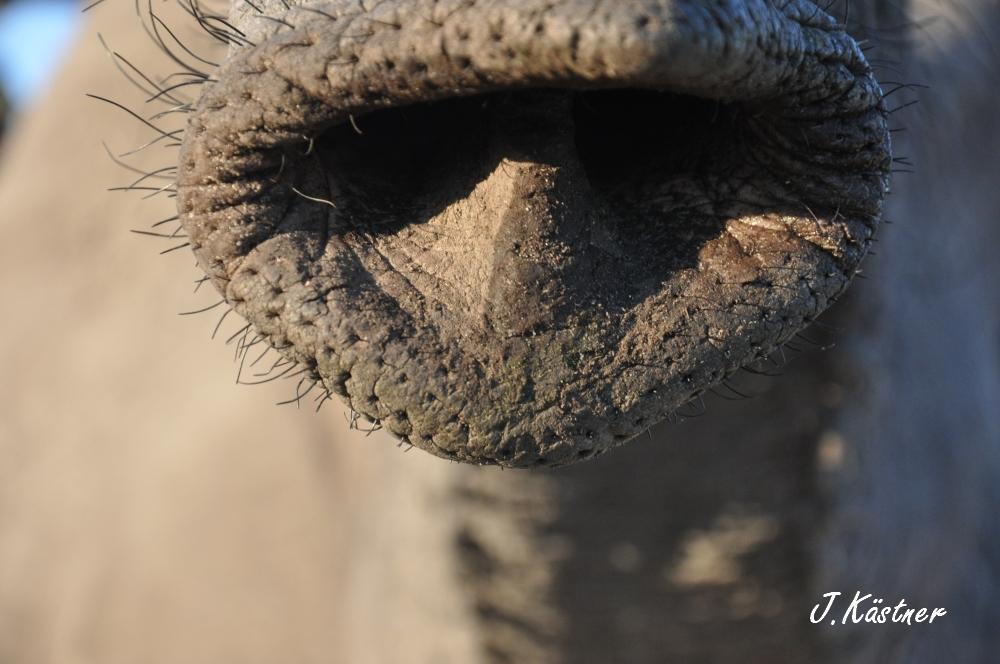 Botswana Treasures. sonne safari botswana afrika  tui berlin Botswana Abu Camp Elefantenruessel