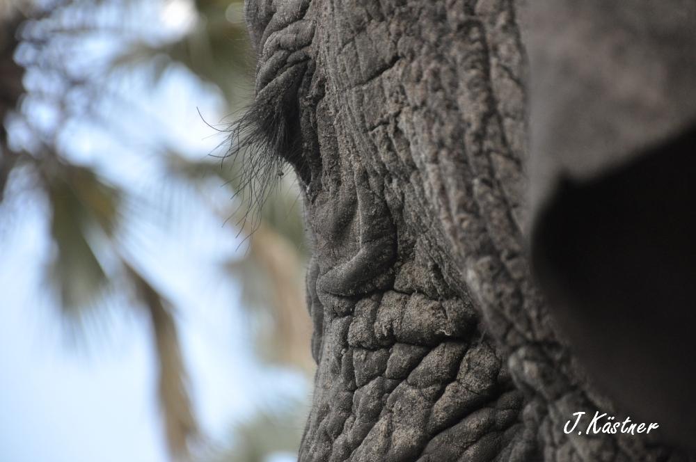 Botswana Treasures. sonne safari botswana afrika  tui berlin Botswana Abu Camp Elefantenwimpern