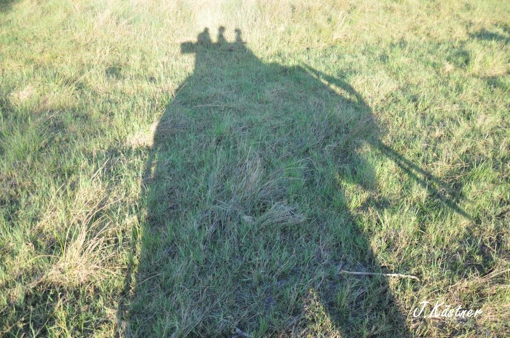Botswana Treasures. sonne safari botswana afrika  tui berlin Botswana Abu Camp Schatten Elefant