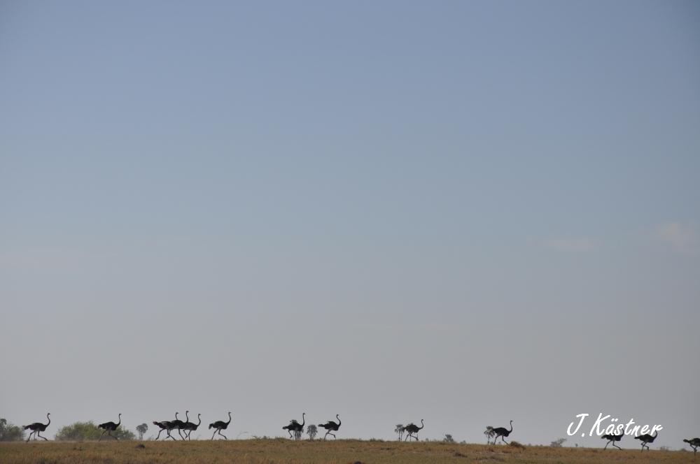 Botswana Treasures. sonne safari botswana afrika  tui berlin Botswana Jacks Camp Kalahari Strauss