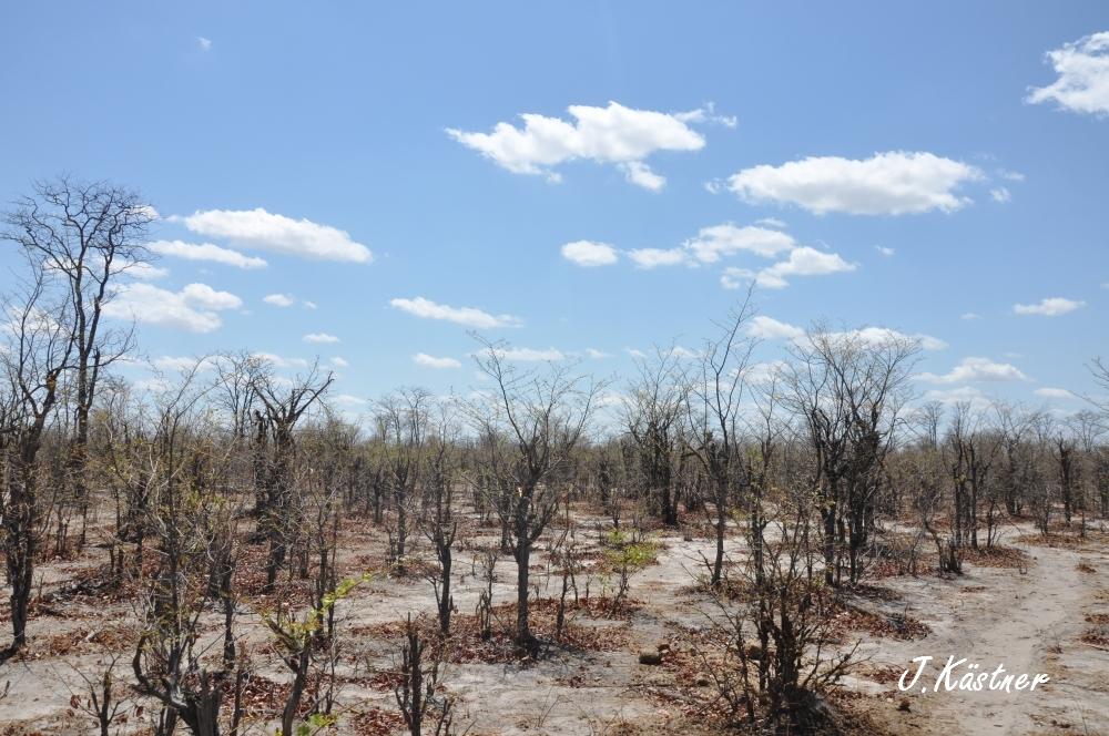 Botswana Treasures. sonne safari botswana afrika  tui berlin Botswana Linyanti Duma Tau Camp Duerre