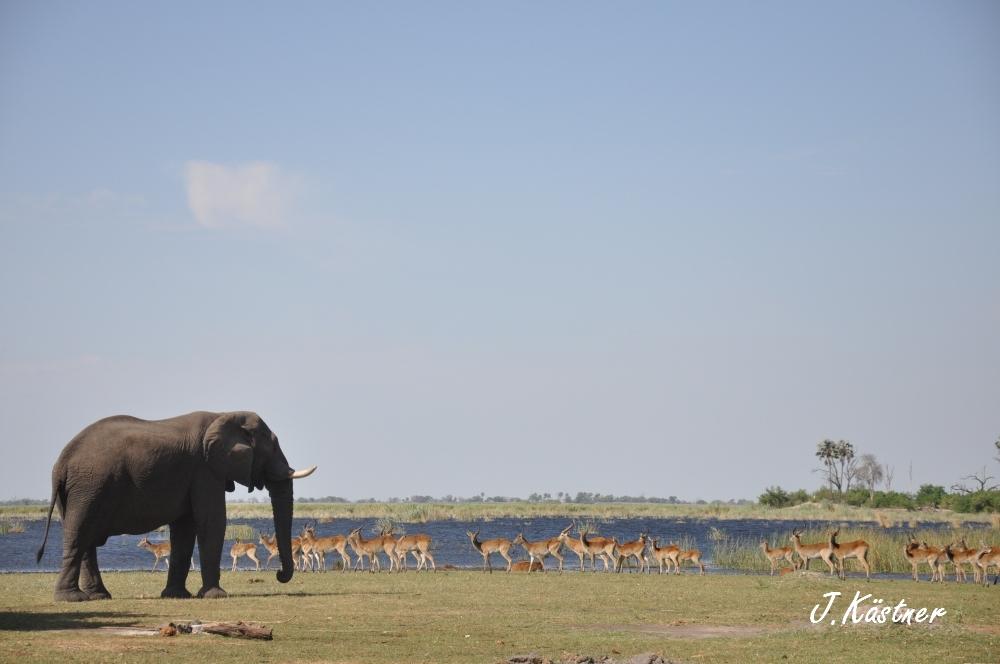 Botswana Treasures. sonne safari botswana afrika  tui berlin Botswana Linyanti Duma Tau Camp Elefant