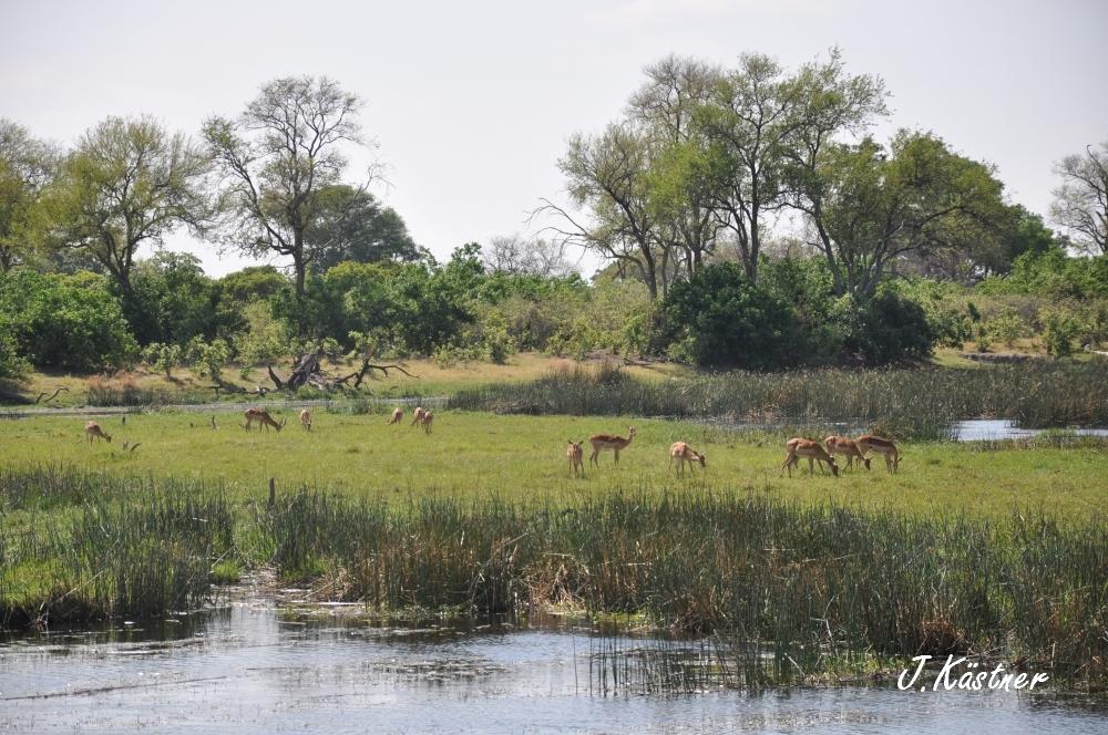 Botswana Treasures. sonne safari botswana afrika  tui berlin Botswana Linyanti Duma Tau Camp Gazelle