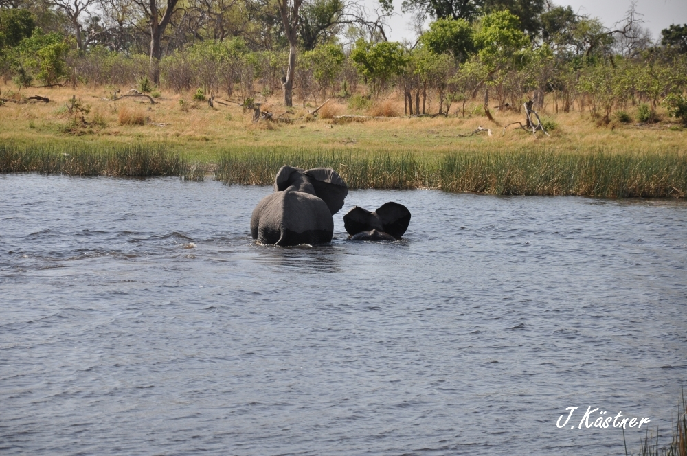 Botswana Treasures. sonne safari botswana afrika  tui berlin Botswana Linyanti Duma Tau Camp Hippos