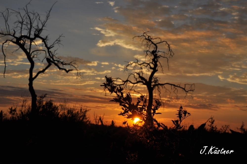 Botswana Treasures. sonne safari botswana afrika  tui berlin Botswana Linyanti Duma Tau Camp Sonnenaufgang