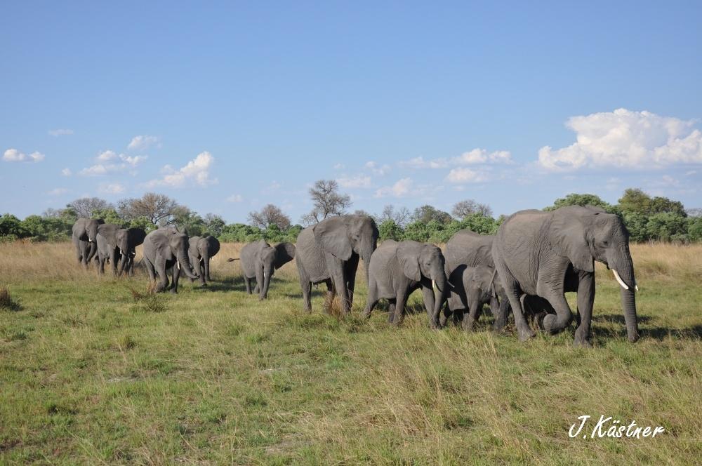 Botswana Treasures. sonne safari botswana afrika  tui berlin Botswana Okavango Delta Elefanten