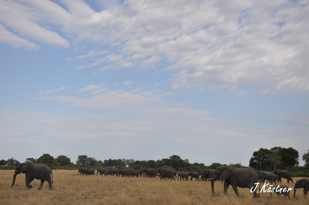 Botswana Treasures. sonne safari botswana afrika  tui berlin Botswana Okavango Delta Elefantenherde
