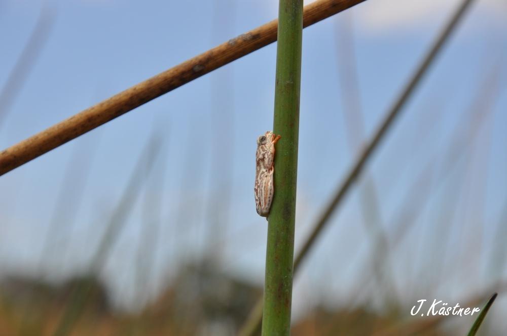 Botswana Treasures. sonne safari botswana afrika  tui berlin Botswana Okavango Delta Frosch