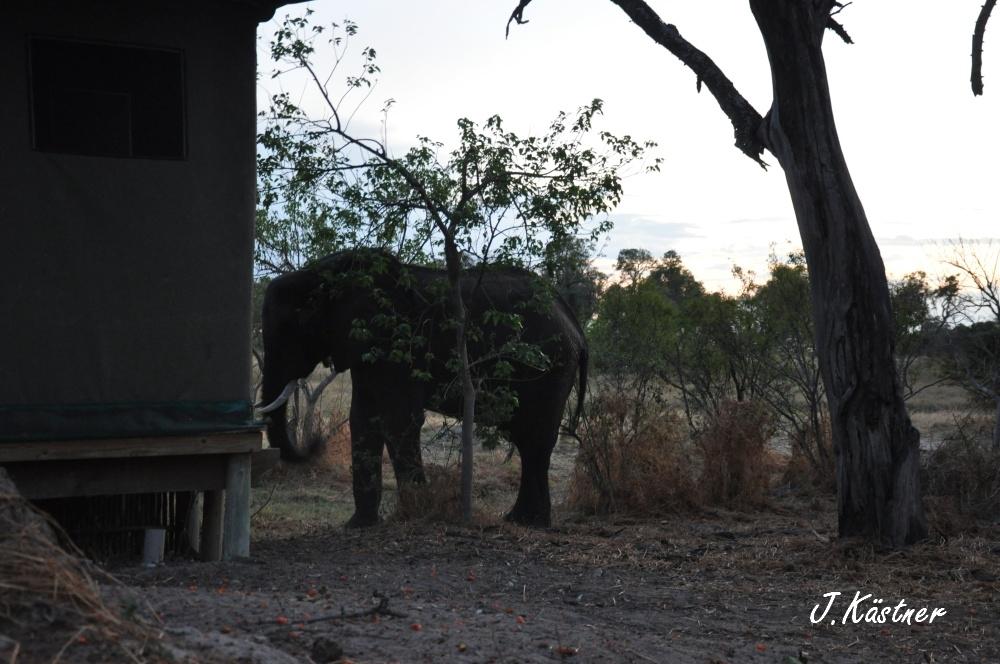Botswana Treasures. sonne safari botswana afrika  tui berlin Botswana Okavango Delta Little Vumbura Camp Elefant