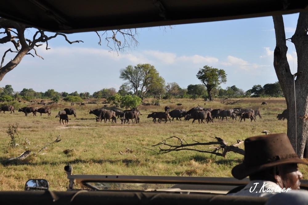 Botswana Treasures. sonne safari botswana afrika  tui berlin Botswana Okavango Delta Pirschfahrt