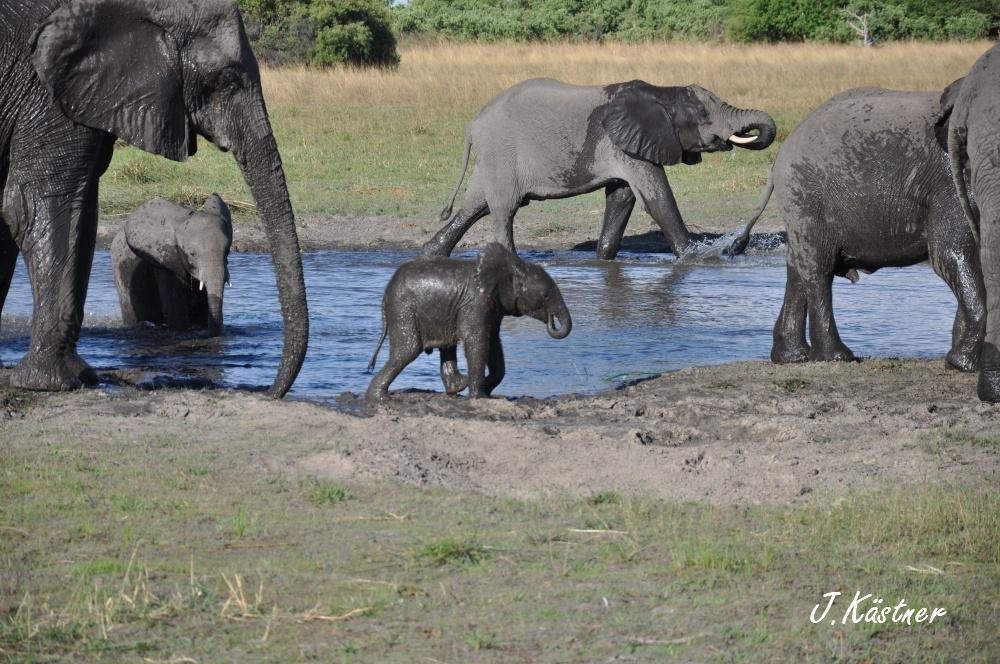 Botswana Treasures. sonne safari botswana afrika  tui berlin Botswana Okavango Delta Wasserloch Elefanten