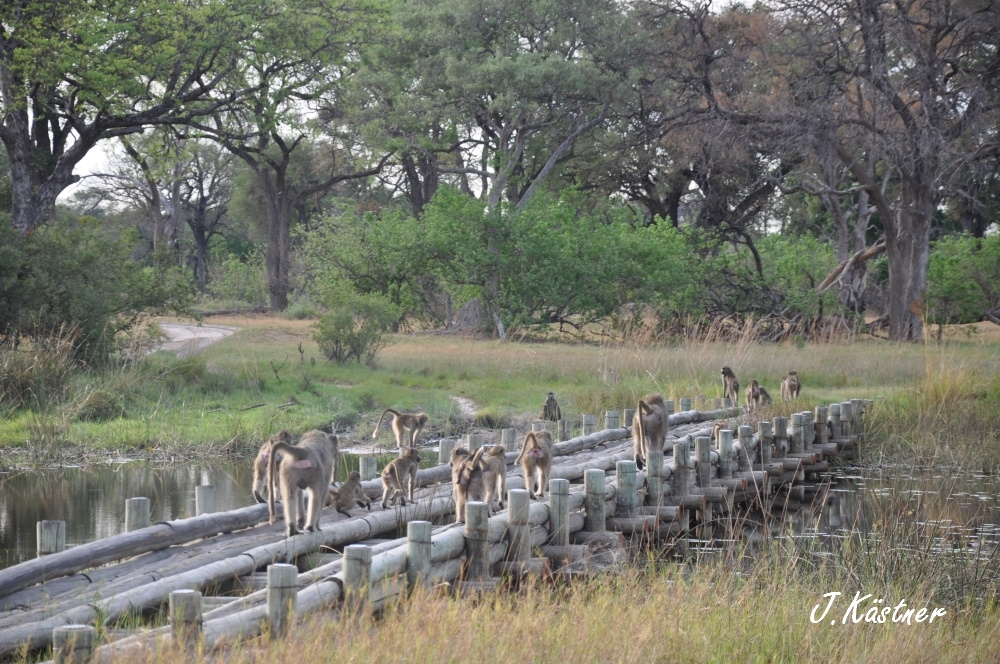 Botswana Treasures. sonne safari botswana afrika  tui berlin Botswana Okavango Delta unterwegs